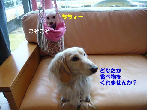 ちちょー1.jpg