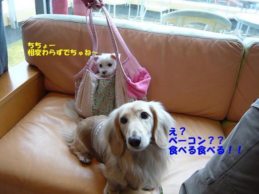 ちちょー4.jpg