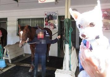 根岸公園(馬) (3).JPG