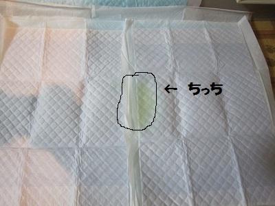真ん中 (2).JPG