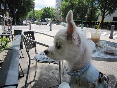 cafe (3).JPG