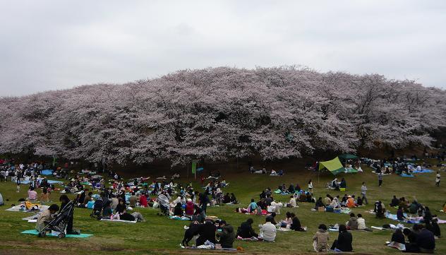 2008330n.JPG