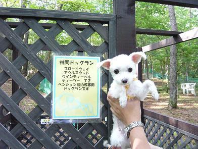 2008夏休み 101.JPG