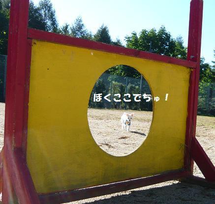 2009夏休み(八ヶ岳軽井沢) 024.JPG
