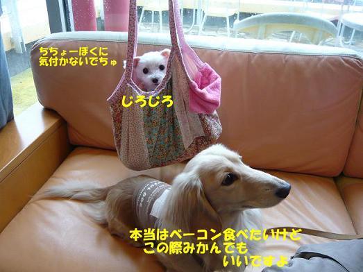 ちちょー3.jpg