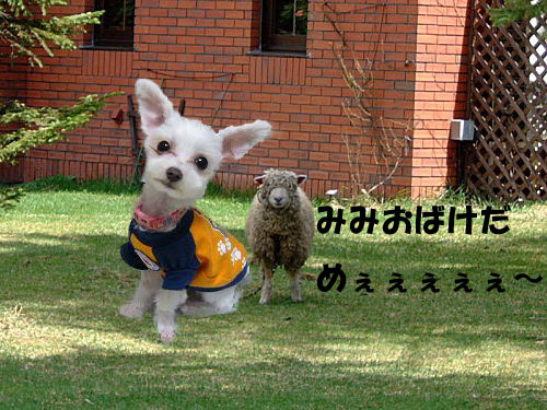 羊のコピー.jpg