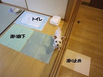 2013夏休み 057.JPG