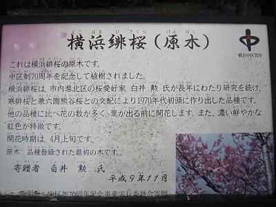 2013桜 015.JPG