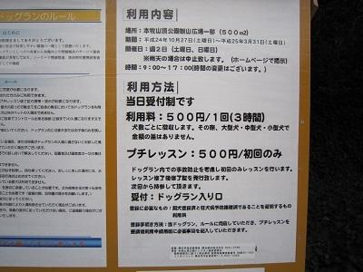 2013桜 018.JPG