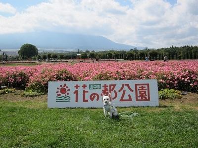 2014夏休み 156.JPG