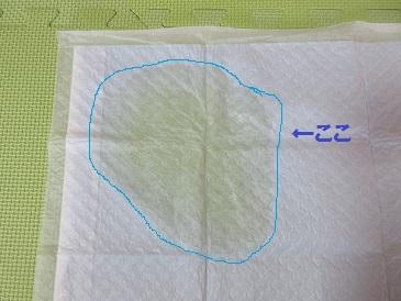おしっこシート 002.JPG