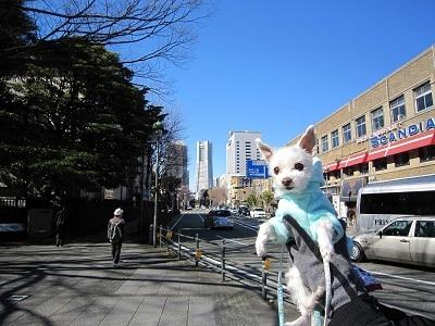 お散歩コース (3).JPG