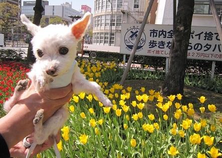 お花 (7).JPG