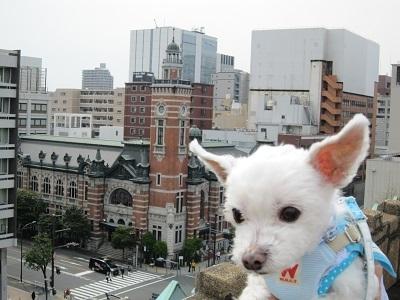 神奈川県庁 (7).JPG