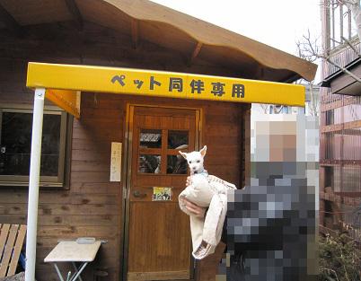 蕎仙 (2).JPG