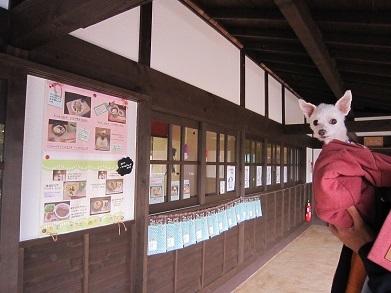 諏訪大社・本宮 (4).JPG