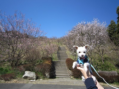 金沢自然公園 017.JPG