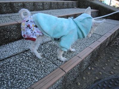 階段でちゅ (1).JPG