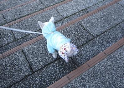階段でちゅ (2).JPG