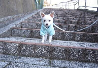 階段でちゅ (3).JPG