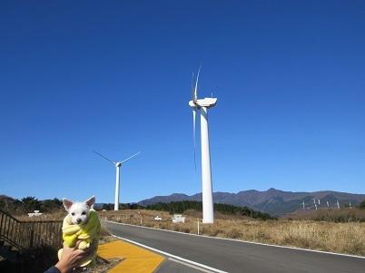 風力発電所 (3).JPG