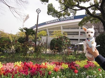 スタジアムのお花.JPG