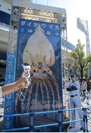 スタジアム水族館 (1).JPG